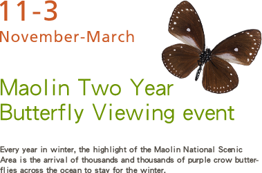 Maolin Two Year Butterfly Viewing event- Every year in winter, the highlight of the Maolin National Scenic Area is the arrival of thousands and thousands of purple crow butterflies across the ocean to stay for the winter.