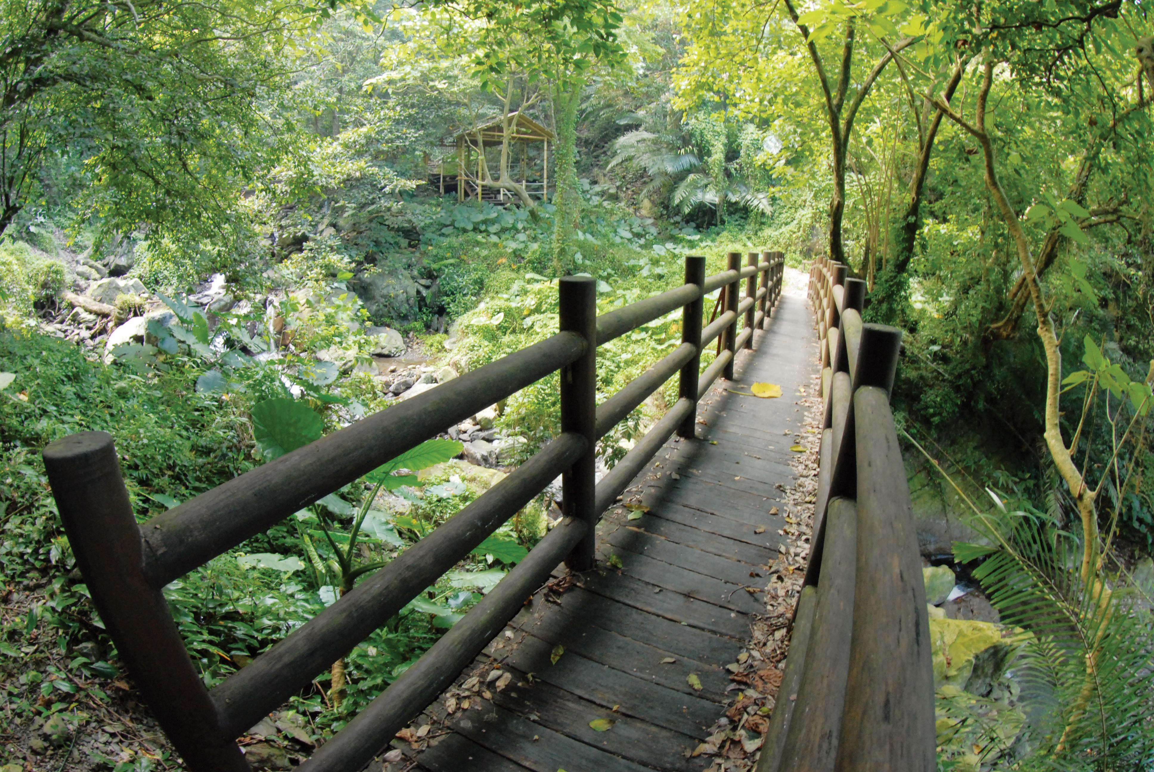 壁纸 风景 森林 桌面 3872_2592